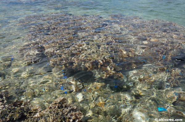 珊瑚 熱帯魚