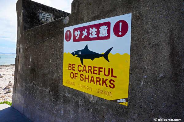 大度海岸 サメ